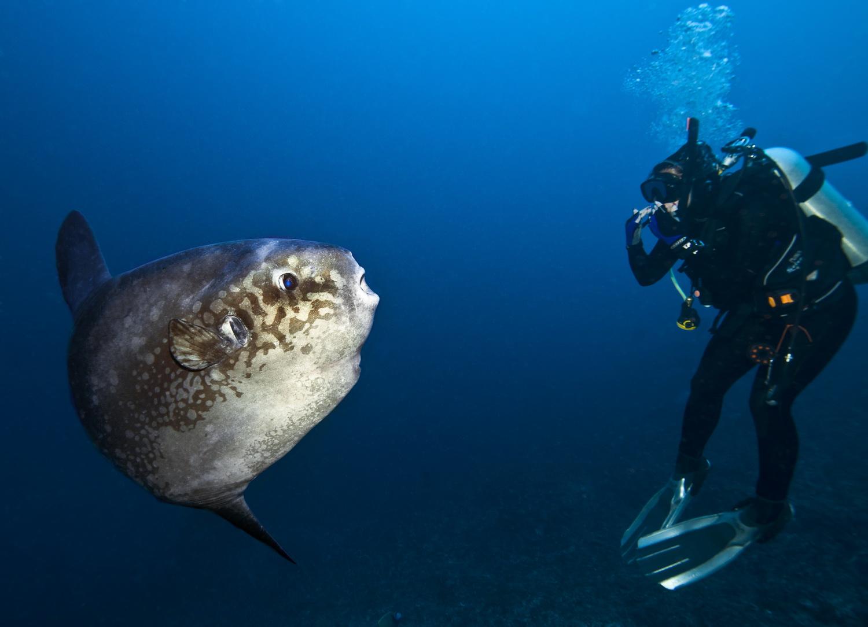 Персональная выставка известного подводного фотохудожника Андрея Городисского «Уровень моря» пройдет в ЦДХ с 13 по 22 октября
